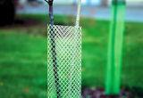 중국제 플라스틱 메시 나무 가드