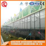 Коммерчески гальванизированная дом сада стальной рамки стеклянная зеленая для сбывания