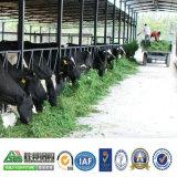 Дом скотоводческого хозяйства стальной структуры