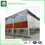 高品質の農業の菜園のトマトのプラスチックフィルムの温室の製造者