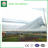 중국 공장에서 판매를 위한 플레스틱 필름 농업 톱니 온실