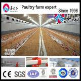 Conjunto Avícola House desenho de projeto para frangos de corte/Reprodutor/Turquia
