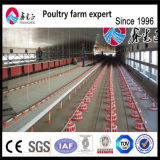 مصنع إمداد تموين شواء [بوولتري فرم قويبمنت] دجاجة يغذّي