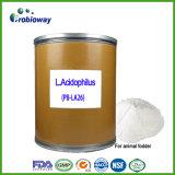 La premiscela acidofila della polvere di Probiotics del lattobacillo mescola il foraggio animale