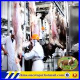 Riga della macchina del macello di macello della strumentazione/mucca di macello di Halal del mattatoio