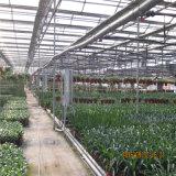 Tipo popolare serra di Venlo del policarbonato da vendere
