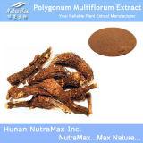 Выдержка Multiflorum Polygonum 100% естественная