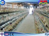 농장 (FLM-F-013)를 위한 Prefabricated 건물 가금 닭장
