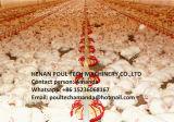 Grill en de Kleine Grond die van de Kip Systeem voor de Landbouw van het Gevogelte opheffen