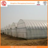 Agriculture / Commercial Plastique Film Tunnel Green Houses pour Strawberry / Rose