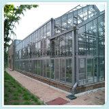 열대 톱니 커버 유리 녹색 집