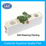 Usine d'alimentation rectangulaire hydroponique Plastic Flower Pot