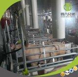 Equipo de granja galvanizado de cerdo de la INMERSIÓN caliente para el embalaje de parto de la puerca