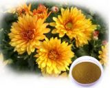 감기 치료를 위해 이용되는 꽃 적출 Tlc 4:1 10:1 Flavone 국화 차 분말