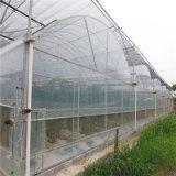 Serre van Venlo van het Glas van de Dekking van het glas de Materiële voor Komkommer