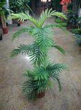 ハワイのヤシの木F08602099の人工的なプラント