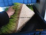 Wasserkultursystems-automatisches Tierfutter-Gersten-Gras, das Maschine pflanzend wächst