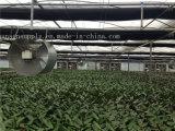 Gewächshaus-Gemüse-Ventilator-Ventilations-Absaugventilator/axiale Gebläse