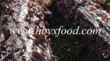 Agarico nero secco alimento cinese squisito