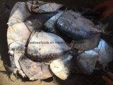 Chinese Bevroren Fabriek Moonfish