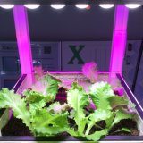 Novo Design de Patentes LED Grow Light Bar para Flower Growing