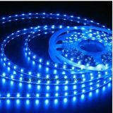Azul 120LEDs / M SMD 2835 Tira LED com lâmpadas altas