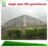 Hot Sale Single Tunnel Plastic Film Green House Fornecedor de vegetais crescendo