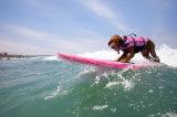 Vente en gros de produits pour animaux de compagnie Dacron Dog Life Jacket
