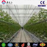 Теплый стали структуры зеленый дом для выращивания овощей