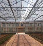 Serra calda d'acciaio di Structue per la verdura (frutta) liberata di