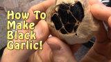 Geheel Zwart Knoflook/het Multi Zwarte Knoflook van de Bol