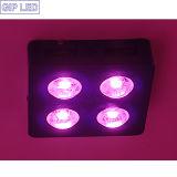 Luz 504W da planta do diodo emissor de luz da ESPIGA para o crescimento de Lant