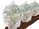 O tomate cresce a tela não tecida da proteção do saco