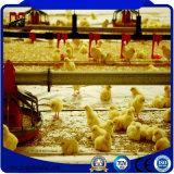 Matériaux de construction légers neufs préfabriqués vendus populaires pour la ferme de poulet