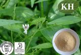 Andrographis PaniculataのエキスAndrographolide 5%、30%