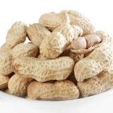Núcleos blanqueados nueva cosecha del cacahuete