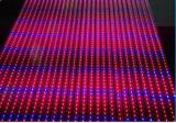 6: 3 빨간 파란 가득 차있는 스펙트럼 옥외 5050 LED는 지구 빛을 증가한다