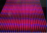 6: 3 Rojo Azul Full Spectrum Outdoor 5050 Crecer LED luces tiras
