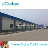 Высокая производительность больших площадей очень низкая температура и заморозьте холодного хранения для замораживания сушки обработки продуктов питания