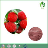 80% ~ 98% Myricetin Natural Chinese Wax Myrtle / Fresh Red Bayberry Extract