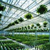 다중 경간 두 배 필름 Hydroponic 녹색 집