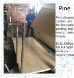 Base del álamo de la madera contrachapada del pino de Radiata para la construcción