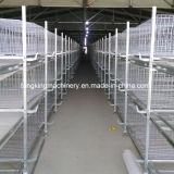 Design profissional sistema de gaiola de frango de baixo custo