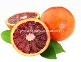Natürlicher Blutorange-Auszug 98% Synephrine, Hesperidin 10-95%