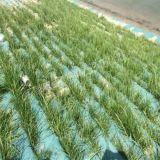 Nontissé Sac de protection contre le gel de couverture végétale
