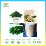 Qualitäts-Nahrungsmittelgrad Spirulina Puder