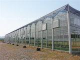 Hensen industrieller Absaugventilator-Wasserkühlung-Ventilator für grünes Haus