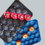 Alles umweltfreundliche pp. Plastikwegwerftellersegment der Farben-Weltpopulären unterschiedlichen Größen-für Frucht