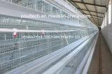 Cage de poulet avec le système automatique de matériel d'enlèvement d'engrais (un type bâti)