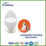 Заквашивание Probiotics лактобациллы котов и собак синергического влияния сбрасывает запор